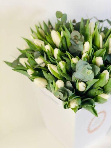 Tulpes Update