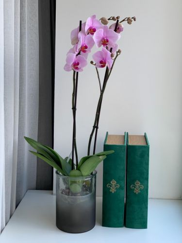 ORCHIDEA  PINK
