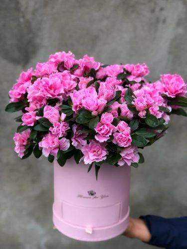 Цветочная коробка ACALIA PINK