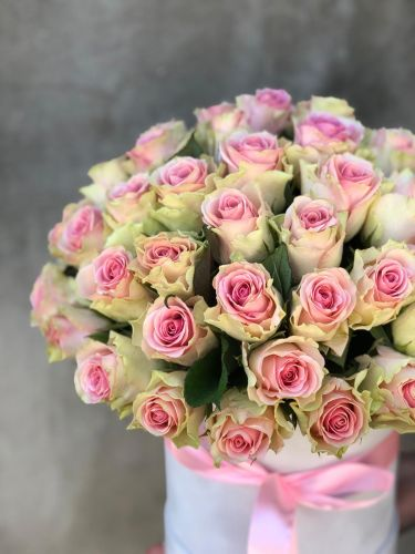 Ziedu kaste SWEET PINK